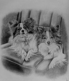 Rascal & Scooter sketch. 2 #Papillons that a client owns & she had me sketch for her. Commissions welcome, visit http://www.gensart.net to order a piece for yourself or a loved one.