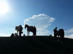 Pacayo Volcano...riding up with horses 2014