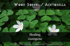 Magical Uses of Wood Sorrel: Healing || Usi Magici dell'Acetosella: Guarigione | L'antro della magia http://antrodellamagia.forumfree.it/?t=3066789