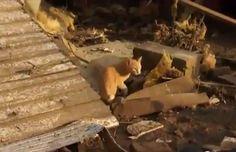 Nebraska Tornado Survivor Finds Her Family's Cat In Debris