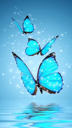 3 Blue Butterflies