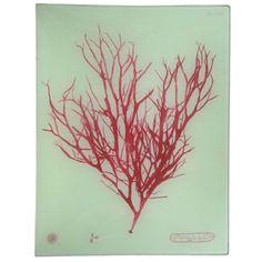John Derian #8 Seaweed XCIIa Tray