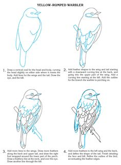 Creative Haven How to Draw Birds: Dover Publications Samples