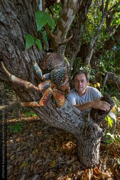 All I can say is that I am glad that I am taller than a coconut crab (albeit not by much! Big Animals, Rare Animals, Animals Of The World, Animals And Pets, Funny Animals, Weird Looking Animals, Unusual Animals, Ocean Creatures, Weird Creatures