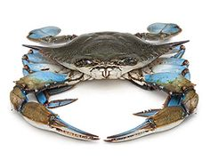 Blue Crab: Such classic American dishes as crab imperial and crab Louis are best with blue crab (or its close cousin, the blue swimmer crab from the Pacific Rim). The Chesapeake Bay is famous for its blue crabs, although demand now outstrips supply. In that region, the crabs are typically steamed with vinegar and Old Bay seasoning, then cracked with mallets and slurped with melted butter. Soft-shell crabs are blues that have just shed their hard shell and not yet grown a new one.