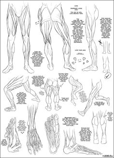 Muscles - Lower Body by DerSketchie on DeviantArt