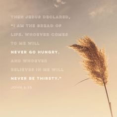 """""""Jesus replied, """"I am the bread of life. Whoever comes to me will never go hungry, and whoever believes in me will never be thirsty."""" John 6:35 CEB http://bible.com/37/jhn.6.35.ceb"""