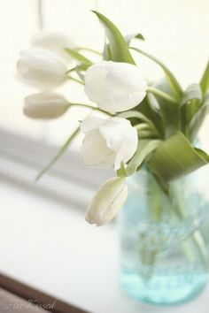 white tulips in an aqua mason jar... i have the jar, now i just need some pretty flowers!