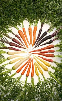 The carrot of various colors