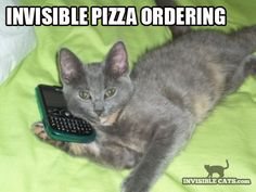 Cat: Heeeello? Can I have meh pizza?