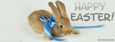 Happy Easter sunday wallpapers hd wishes Easter Greetings Messages, Easter Wishes, Inspirational Easter Messages, Kerala, Happy Easter Wallpaper, Happy Easter Bunny, Easter Quotes, Facebook Timeline Covers, All Things Cute