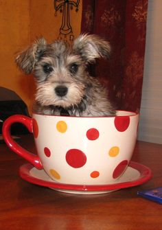 I wish I would have put Dotty in a cup when she was itty bitty.