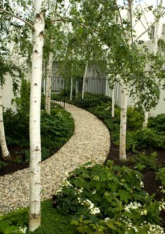I would add a ground cover, for example Creeping Jenny, to fill in those bare patches but otherwise I love it. I love birch! (by julian ronchi)