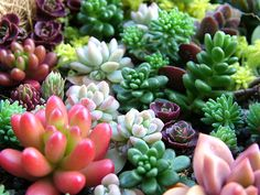 sedums.......most are moderate growing groundcovers.   Great for fill ins between other larger succulents.