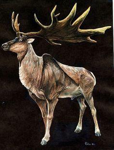 giant prehistoric deer. irish elk