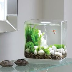 Een Biorb aquarium waar stijl, design en techniek voorop staat