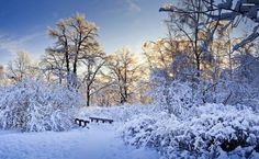 Heavy snow in the forest HD Wallpaper