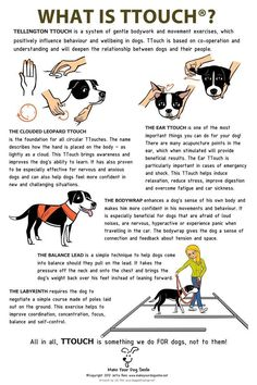 Pupy Training Treats - Awesome 45 Puppy Training Tips Puppies need naps the same as babies. Quite a few of our past puppies have created wonderful service and therapy dogs too. Possessing a new puppy is a rather intriguin - How to train a puppy? Puppy Training Tips, Training Your Dog, Agility Training, Triathlon Training, Training Collar, Potty Training, Diy Pour Chien, Therapy Dogs, Yorkies