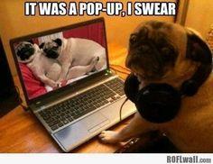 Naughty dog...:)
