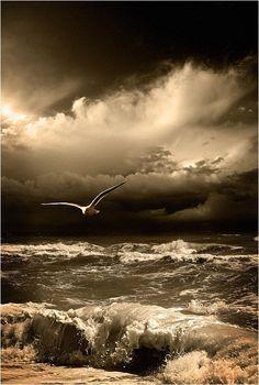 Flight. Photo, Ocean, Darkness/Obscurité, Movement/mouvement, Sadness/Tristesse, Sepia.