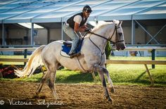 Stunning grey. Thoroughbred race horse photography.