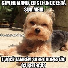 #petmeupet  #amocachorro  #cachorro  #cachorroétudodebom  #amoanimais  #filhode4patas