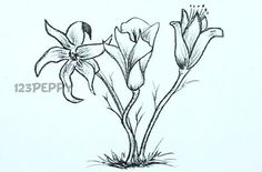 Image detail for -How to draw Flowers - Basic Drawings - Flower Drawings - Drawing for ...