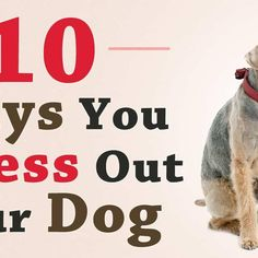 What Triggers Stress in Your Dogs?