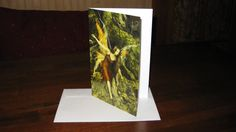Clairyon Call detail  5.5x8.5  Blank Note Card / Greeting Card FREE SHIPPING. $4.00, via Etsy.