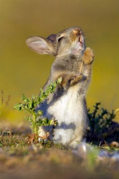 Watch what happens when this adorable rabbit tries thistle