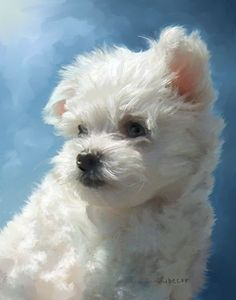 Maltese Puppy Painting