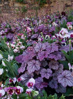 Heuchera with Viola for shade garden 😍 Planters For Shade, Shade Plants, Garden Planters, Balcony Garden, Garden Beds, Garden Grass, Corner Garden, Pergola Garden, Moon Garden