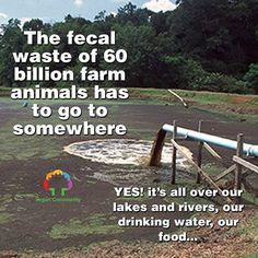 Animal Agriculture must STOP else we can expect a big shit storm that will pollute not just our planet and will also put. Vegan Facts, Vegan Memes, Vegan Quotes, Reasons To Be Vegan, Factory Farming, Why Vegan, Vegan Animals, Environmental Issues, Save The Planet