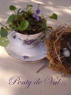 #Penty_de_Val #violette #nid