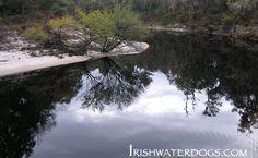 Black water of The Suwannee - Suwannee River kayak-camp | IRISHWATERDOGS - Kayaking, Hiking, Camping and Outdoors.