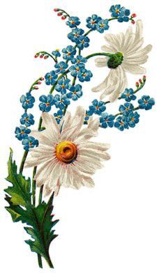 Daisy and for get me nots