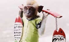 Jakarta says no to dancing monkey shows.   Way to go, Indonesia.
