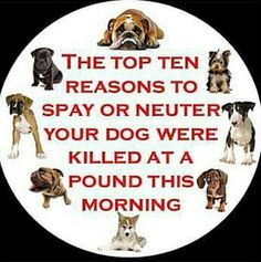 The top 10 reasons to spay or neuter