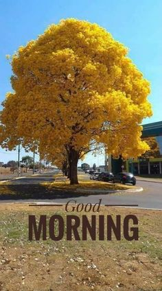 Good Morning Wishes images, Wallpaper, Photos, Pictures Morning Pictures, Good Morning Images, Beau Message, Yellow Tree, Red Tree, Yellow Leaves, Good Morning Flowers, Colorful Trees, Nature Tree
