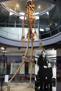 "Videos: OVER 1000 Giant skeleton have been found in recent years. 7 Metre ""Giant Skeleton"" On Display In Switzerland? Ancient Aliens, Ancient History, Human Giant, Giant People, Tall People, Nephilim Giants, Human Oddities, Ancient Artifacts, History Facts"