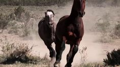 Watch Wild Horses & Renegades - A Modern Day Western - Online | Vimeo On Demand on Vimeo