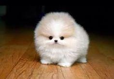 Small & Fluffy