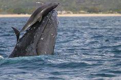 Baleia e Golfinho