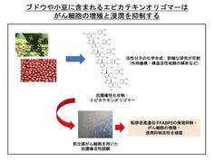 ぶどうのポリフェノール がんの増殖・転移も抑制