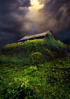 Forgotten, by Phil Koch. Another one of Koch's incredibly beautiful photographs.