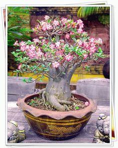 Image from http://picdb.thaimisc.com/m/maipradab3/6417.jpg.