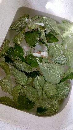 make-her-powder-nettle-house # DIY house, DIY material, DIY easy, . Eco Garden, Diy Organisation, Beauty Recipe, Permaculture, Diy Tutorial, Body Care, Natural Remedies, Easy Diy, Diy Beauté