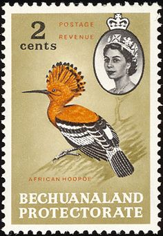 Birds on stamps: Bechuanaland protectorate stamp with a hoopoe