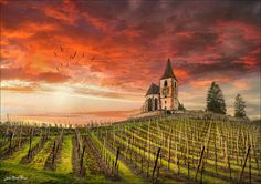Hunawihr - Alsace - France - Saint-Jacques-le-Majeur Church and vineyards (Jean-Michel Priaux, flickr