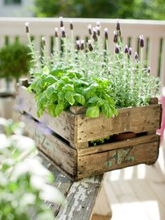 Fresh lavender in a vintage crate. Other herbs can be incorporated too.